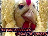 The DINGLEBERRYS sing Choke the Chicken